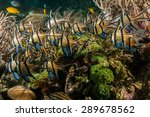 scuba diving lembeh indonesia... | Shutterstock . vector #289678562