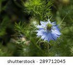 Black Seed  Nigella Sativa ...