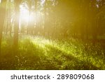 forest landscape  sunshine | Shutterstock . vector #289809068