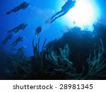 divers at reef in turks and... | Shutterstock . vector #28981345