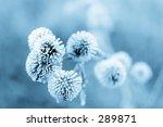 Frozen Burdock Plant   Blue...