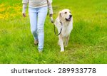 Stock photo owner and happy golden retriever dog on the grass walking in summer day 289933778