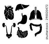 vector organ anatomy   black... | Shutterstock .eps vector #290020472