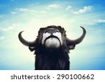 Big Black Bull Portrait