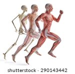 anatomy of a runner | Shutterstock . vector #290143442