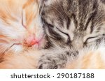 Stock photo two sleeping kittens close up macro red and gray cats 290187188