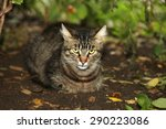 striped cat | Shutterstock . vector #290223086