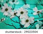 A photo based illustration of dogwood blossoms with blue tones - stock photo