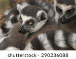 lemur | Shutterstock . vector #290236088