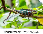 View Of A Green Chameleon On A...