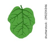 green leaf of tree  isolated on ... | Shutterstock .eps vector #290254346
