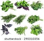 basil  herb  freshness. | Shutterstock . vector #290310356