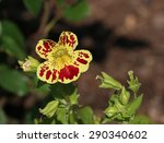 mimulus luteus or yellow monkey ... | Shutterstock . vector #290340602
