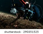 diver take photo video seahorse ... | Shutterstock . vector #290351525