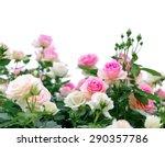 Climbing Pink Roses On White...