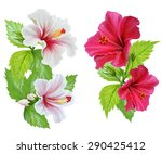 hibiscus flowers. white and red ...