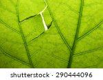 Damaged Green Leaf Close Up