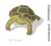 tortoise casts a shadow on... | Shutterstock .eps vector #290540816