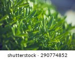 green fresh plants grass... | Shutterstock . vector #290774852