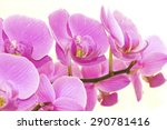 burgeoning little wonderful...   Shutterstock . vector #290781416
