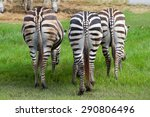Ass Of Three Zebras On The...