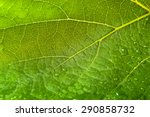 Macro Of Leaf Structure. Drops...