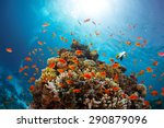 Coral Reef With Fishes Around...