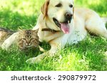Stock photo friendly dog and cat resting over green grass background 290879972