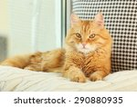 Stock photo red cat resting indoors 290880935