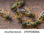Several Wasps Gathering Near...