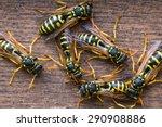 Several Wasps Gathering Near...