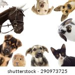 Stock photo puppy and kitten and guinea pig and horse and rat 290973725