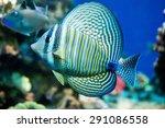 Saltwater Aquarium Fish  ...