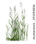 plant isolated collection | Shutterstock . vector #291093836