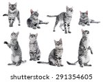 Stock photo collage of beautiful grey cat isolated on white 291354605