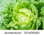 close up of fresh cabbage in... | Shutterstock . vector #291600065