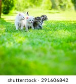 Stock photo four little kitten walking on the green grass 291606842
