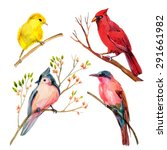 Watercolor Bird Set  Red...