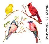 Watercolor Bird Set  Red...