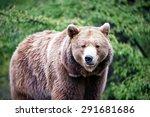 Walking Brown Bear And Green...