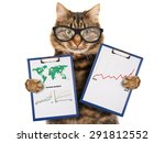 funny cat with a folder for... | Shutterstock . vector #291812552