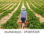 funny little kid picking and... | Shutterstock . vector #291845105