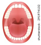 teeth   open adult mouth model... | Shutterstock .eps vector #291974132
