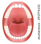 teeth   open adult mouth model...   Shutterstock .eps vector #291974132