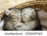 Stock photo cute tabby kittens sleeping and hugging in a basket 292049765