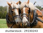 A Matched Pair Of Draft Horses...