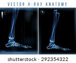 Vector 3d X Ray Transparent Leg ...