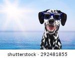 happy dalmatian breed dog on... | Shutterstock . vector #292481855