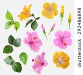 set flowers hibiscus yellow and ... | Shutterstock .eps vector #292486898