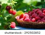 Raspberries In A Wicker Plate ...
